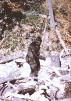 (classic blurry photo of Bigfoot from 1967)